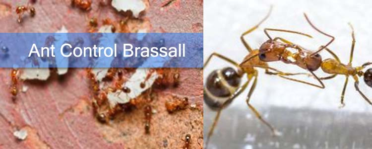 Ant Control Brassall