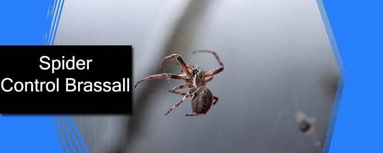 Spider Control Brassall